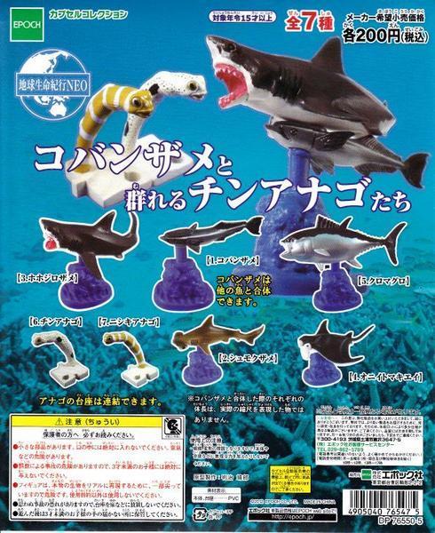 ■コバンザメと群れるチンアナゴたち■6種セット