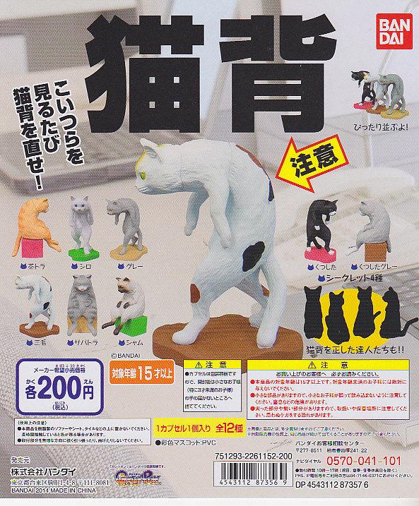 完売■6月予約:猫背■12個※※