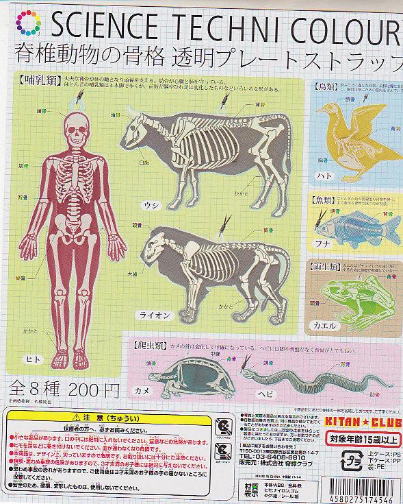 ■サイエンステクニカラー 脊髄動物の骨格プレートストラップ■全8種