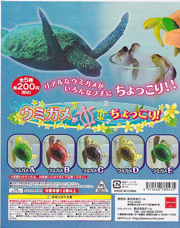 ■ウミガメがちょっこり!■全5種