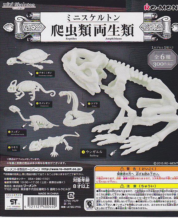 ■ミニスケルトン 爬虫類両生類■6種