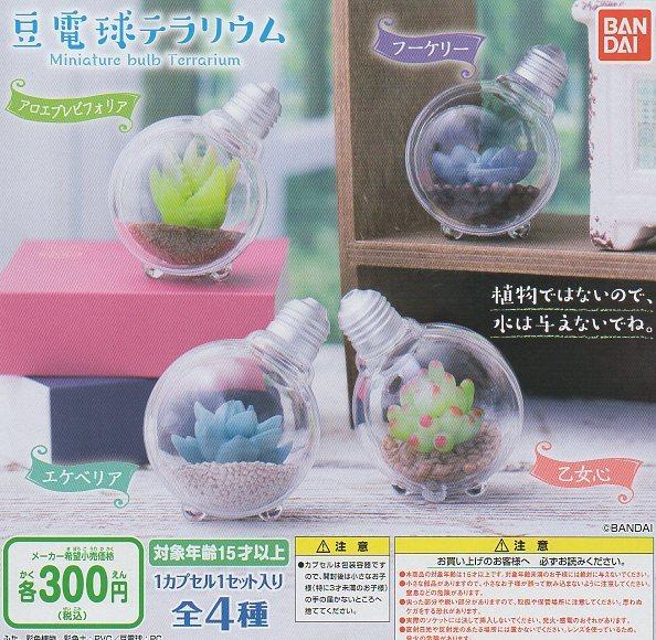 ■豆電球テラリウム■4種