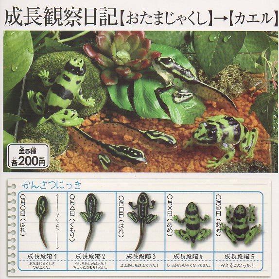 ■成長観察日記【おたまじゃくし】→【カエル】■5種