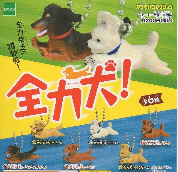 ◎全力犬◎6種