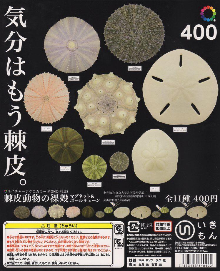■MONO+棘皮動物の裸殻 マグネット&ボールチェーン■8種+重複5個