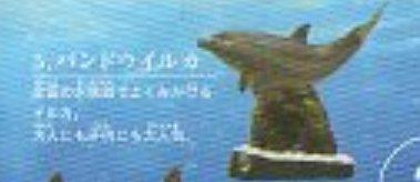 ★クジラ2■単品5.バンドウイルカ