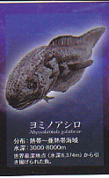 ■深海魚■単品 ヨミノアシロ