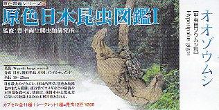 ■原色日本昆虫図鑑1■単品 オオゾウムシ