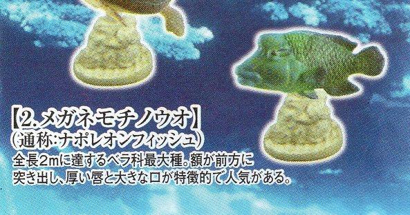 ■ウミガメ&サンゴ礁を彩る生き物■単品 メガネモチノウオ