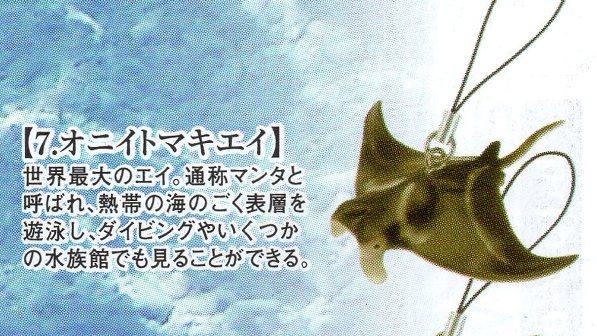 ■サメ&日本近海の生き物たちストラップ■単品 オニイトマキエイ