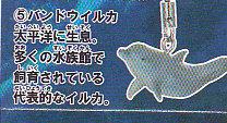 甲殻類と海の仲間タチストラップ■単品 バンドウイルカ