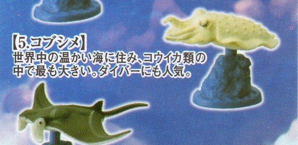 タラバガニ&日本近海の魚たち■単品 コブシメ