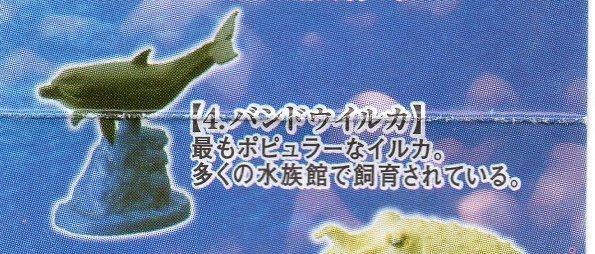 ◇タラバガニ&日本近海の魚たち■単品 バンドウイルカ