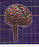 ◇人体模型■単品 ノーマルカラー脳の構造模型