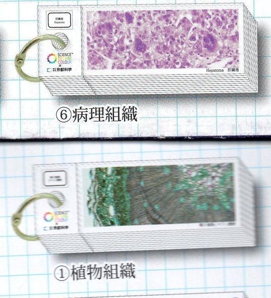 ◇生物学者のプレパラートシール帳■�@植物組織&�E病理組織