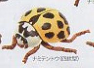 ◎テントウムシストラップ◎ナミテントウ(四紋型)